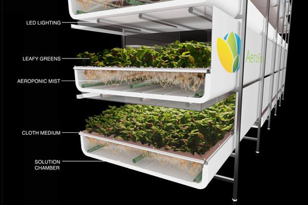 AeroFarm: cultivos sin tierra ni luz y casi sin agua. 1